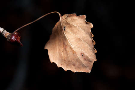 autumn dry leaf photo