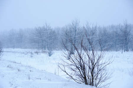 View of trees during snowing. Winter scene. photo