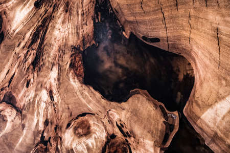 Texture cross section of elm tree. Natural burl wood background. Wood surface. Exotic wooden beautiful pattern. Live elm slab. Furniture manufacture. Woodworking and carpentry production. Archivio Fotografico