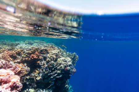 Underwater landscape. Marine life under sea surface, colorful sea life. Coral reef and tropical fish. Red Sea seabed. Biological diversity and environmental conservation. Natural scene.