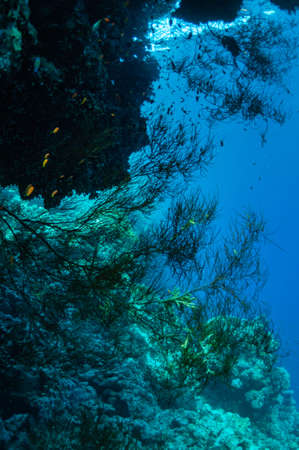 Underwater landscape. Marine life under sea surface, colorful sea life, natural scene. Coral reef and tropical fish. Red Sea seabed. Biological diversity and environmental conservation.