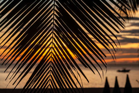 A beautiful colorful sunset through dark palm leaves. Slightly visible silhouettes of deck chairs and a drifting boat. Golden sky who colored by sun. On the beach of the Andaman Sea. Thailand