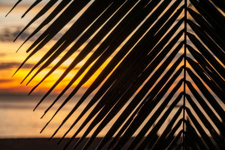 A look at a beautiful colorful sunset through dark palm leaves. View on Golden sky. On the beach of the Andaman Sea. Harmony with a nature Thailand. On the beach of the Andaman Sea. Tranquil place. 免版税图像