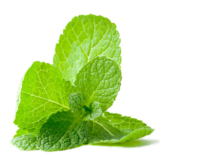 Fresh mint leafs isolated on a white background Standard-Bild