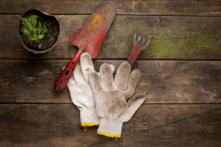 close p: Gardening tools on old wooden background close u p Stock Photo