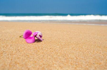 leelawadee: pink Leelawadee flower on the white sand Stock Photo