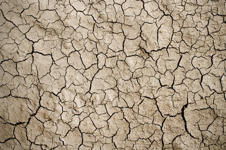 Dry cracked ground filling the frame as background.