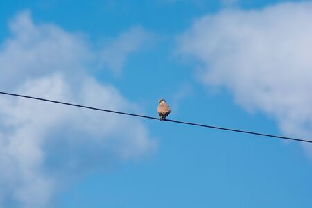 sparrowhawk: red-footed falcon siting on a wire. Sky background