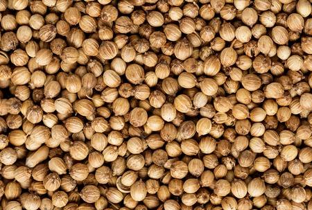 coriandrum sativum: Organic Dried coriander seeds Coriandrum sativum closeup background texture. Stock Photo