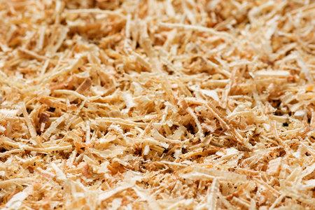 filings: Wooden sawdust texture close up. Abstract background.