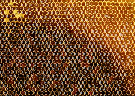 Background texture and pattern of a section of wax honeycomb from a bee hive filled with golden honey. Imagens
