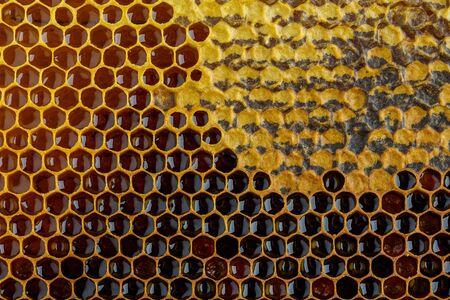 Wabe mit Honig und Pollen. Nahaufnahmehintergrund mit selektivem Fokus.