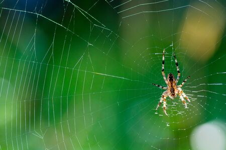 Spiderweb background, network of spider, spring season, beauty of wild nature concept.