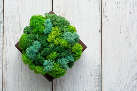 Generic concept image of decorative moss. Used for interior design, organic fresh living or office spaces, green living or presentations, brochures. Zdjęcie Seryjne