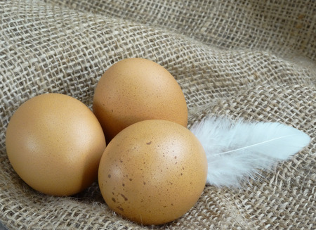 Brown chicken eggs on burlap over wooden background with feather