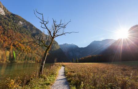 berchtesgaden: Dead tree and Konigssee lake Berchtesgaden,Germany Stock Photo