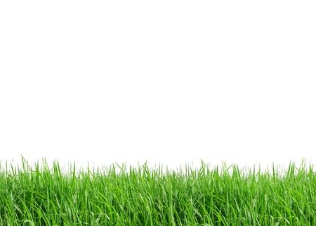 흰색 배경에 고립 된 잔디 프레임
