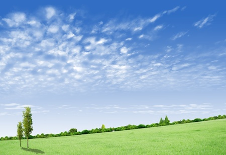 Beautiful landscape with tree, forrest and grass green field photo