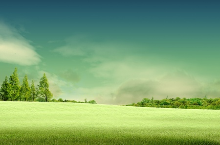 vista: Spring landscape with forrest, tree,green grass and field background