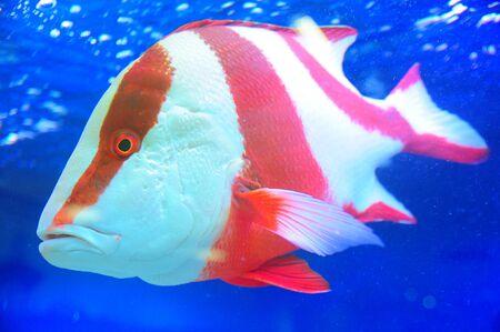 underwater fish photo