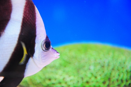 actinia: Exotic fishes, Underwater world