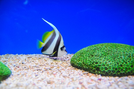 Exotic fishes, Underwater world photo