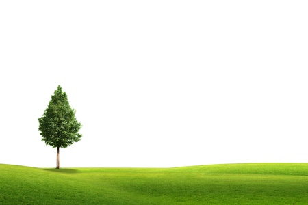 a white background: field landscape with trees isolated on white background