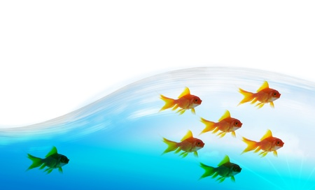 goldfish follower on water background, unique and diffrent business concept photo