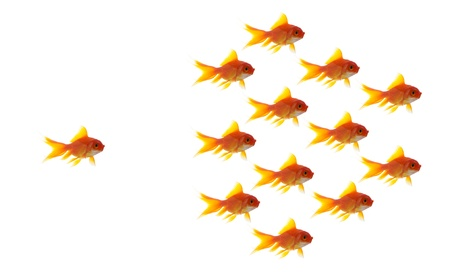 goldfish follower on white background, unique and diffrent business concept photo