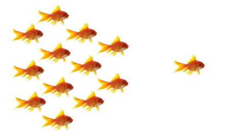 leadership training: goldfish leader on white background, unique and diffrent business concept