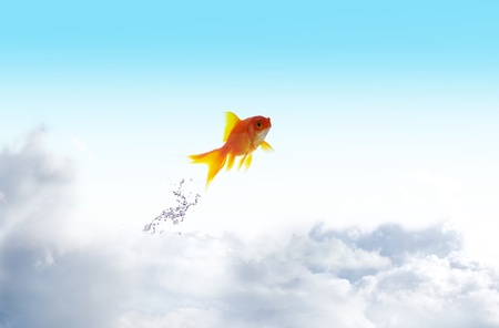 tropical tank: Goldfish jumping up with sky background Stock Photo