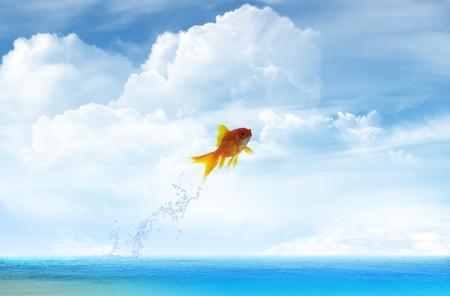 pez pecera: Pececito saltando hasta con fondo de cielo