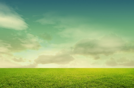 meadow grass: green grass isolated on white background  Stock Photo