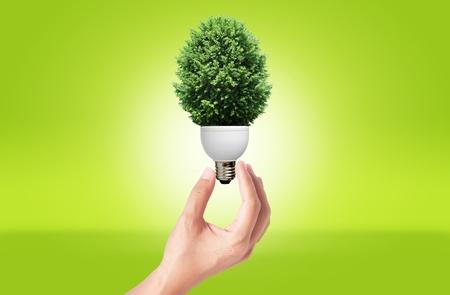 Dłoń trzymająca Lampa z zielonym drzewem na zielonej koncepcji eko