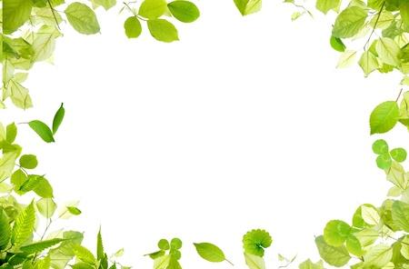 green fresh leaves frame photo