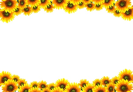 sun flower frame photo