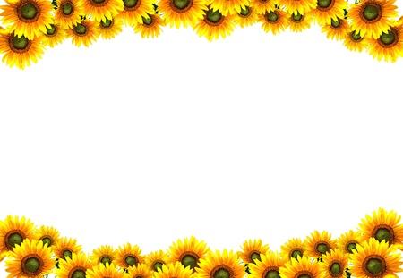 sun flower frame photo