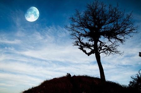 loup garou: La pleine lune brillante avec le paysage d'arbres morts