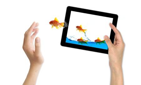 peixe dourado: goldfish leader on white background, unique and diffrent business concept