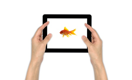 goldfish leader on white background, unique and diffrent business concept Stock Photo - 11568561
