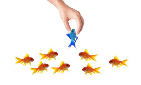 unique concept: goldfish leader on white background, unique and diffrent business concept