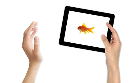 goldfish leader on white background, unique and diffrent business concept Stock Photo - 11568566