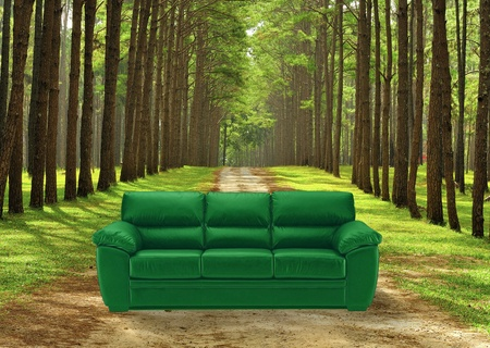 Green sofa in front of pine forrest photo