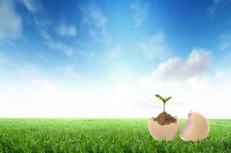 come�o: Green mudas crescem fora do solo no ovo Banco de Imagens