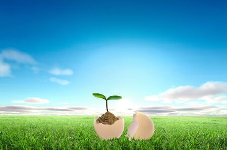 Business growth concept with ypoung plant and soil on white background photo