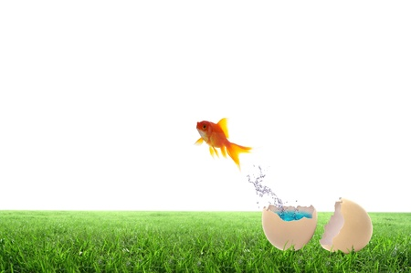 Golden fish jump out side the egg Stock Photo - 12761431