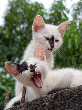 Two little cats resting over the wall