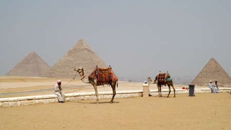 Camels in front Pyramids of Egypt