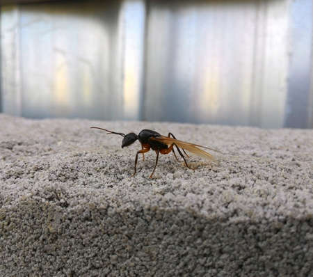 Flying ant over the wall