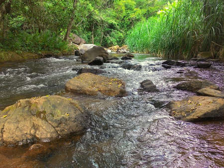 River stream flowing forest Brazil
